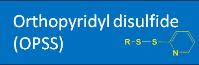 Orthopyridyl disulfide (OPSS)